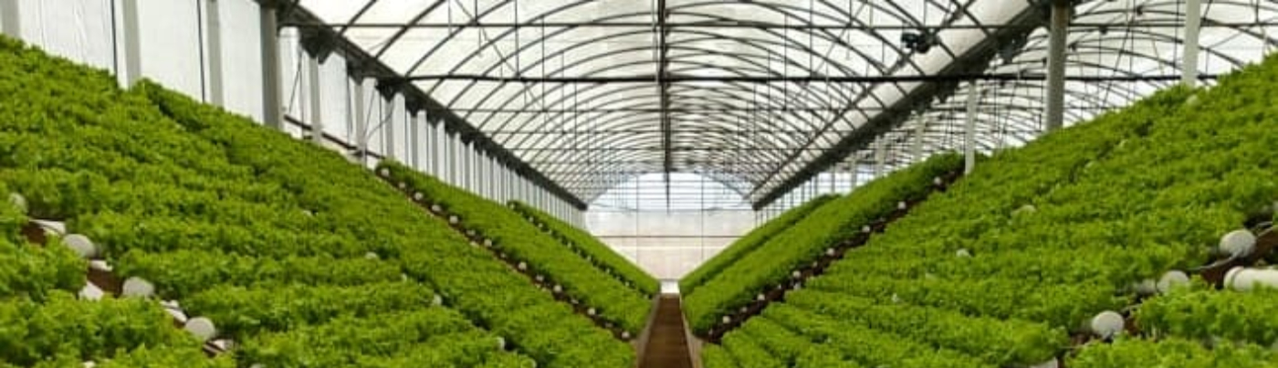 High-Tech Agribusiness Companies in the Caribbean